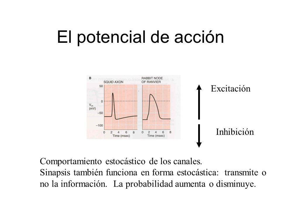 El potencial de acción Comportamiento estocástico de los canales. Sinapsis también funciona en forma estocástica: transmite o no la información. La pr