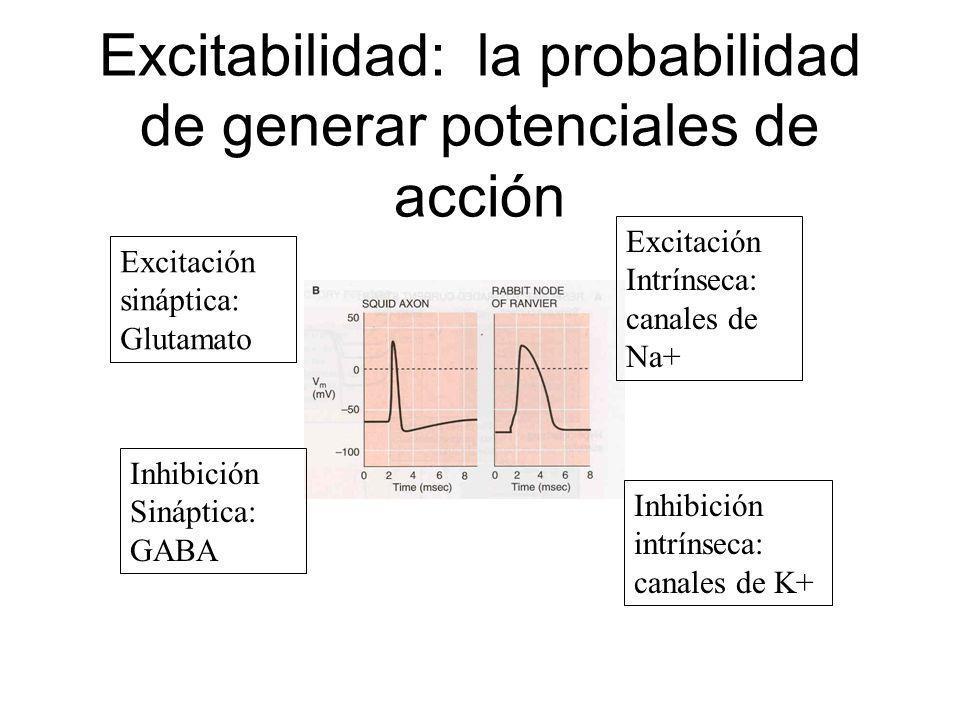 Excitabilidad: la probabilidad de generar potenciales de acción Excitación sináptica: Glutamato Inhibición Sináptica: GABA Excitación Intrínseca: cana