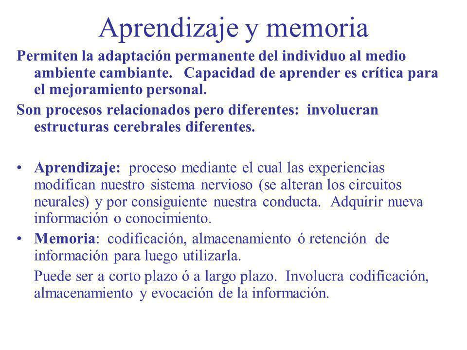 Aprendizaje y memoria Permiten la adaptación permanente del individuo al medio ambiente cambiante. Capacidad de aprender es crítica para el mejoramien