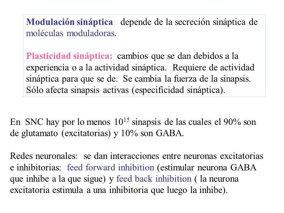 Modulación sináptica: depende de la secreción sináptica de moléculas moduladoras. Plasticidad sináptica: cambios que se dan debidos a la experiencia o