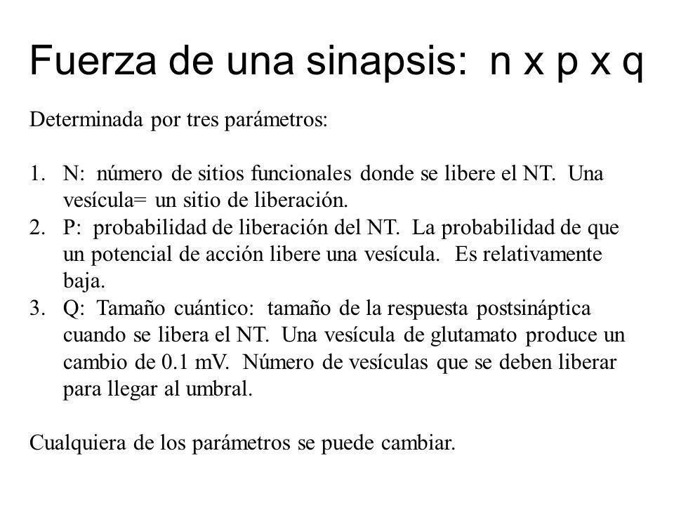 Fuerza de una sinapsis: n x p x q Determinada por tres parámetros: 1.N: número de sitios funcionales donde se libere el NT. Una vesícula= un sitio de