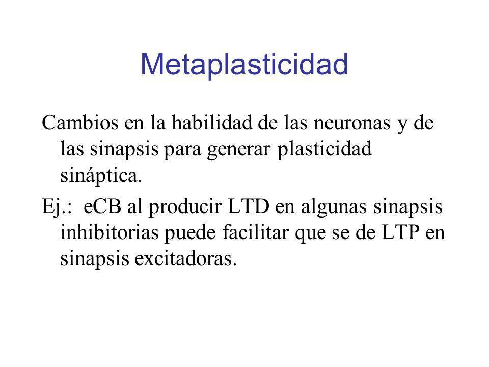 Metaplasticidad Cambios en la habilidad de las neuronas y de las sinapsis para generar plasticidad sináptica. Ej.: eCB al producir LTD en algunas sina