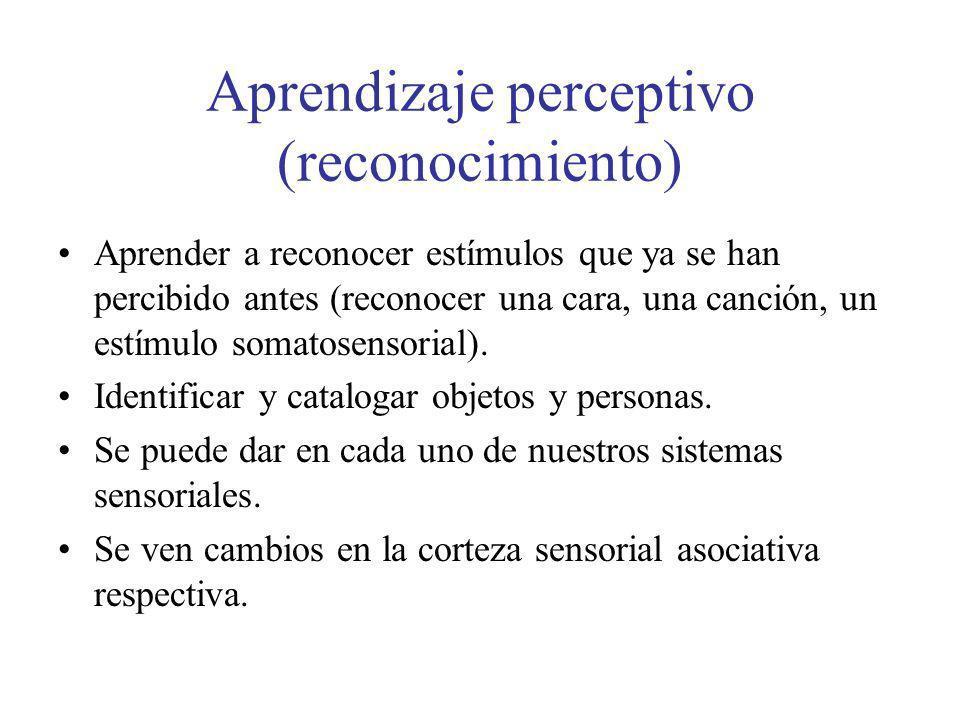 Aprendizaje perceptivo (reconocimiento) Aprender a reconocer estímulos que ya se han percibido antes (reconocer una cara, una canción, un estímulo som