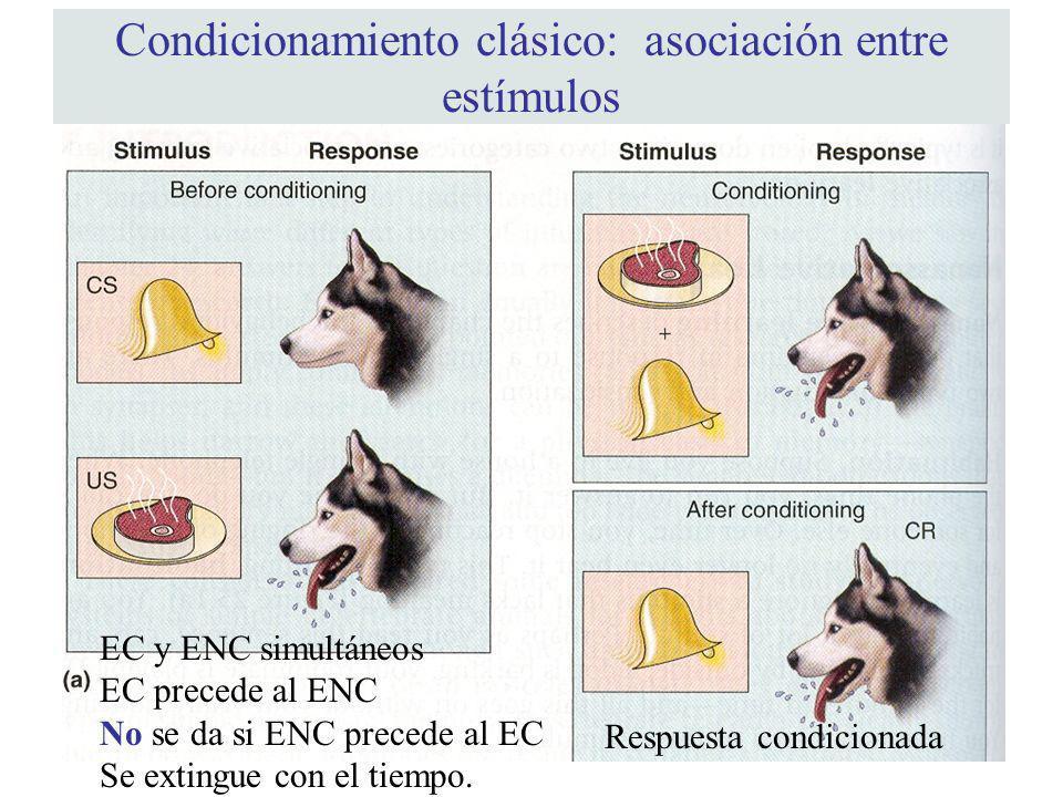 Condicionamiento clásico: asociación entre estímulos Respuesta condicionada EC y ENC simultáneos EC precede al ENC No se da si ENC precede al EC Se ex