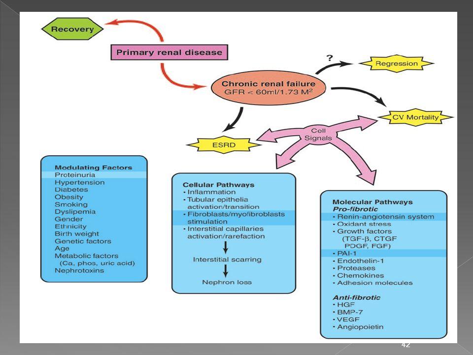 43 Inflamación de pared Capilar O 2 -, TGF- 1 / PAI-1 43 Hipertensión intraGlomerular Angiotensina II Hemodinámicos No-Hemodinámicos esclerosis y Fibrosis Lesión a Células Glomerulares Proteinuria Cicatrización Glomerular y Tubular Fallo renal progresivo Aldosterona