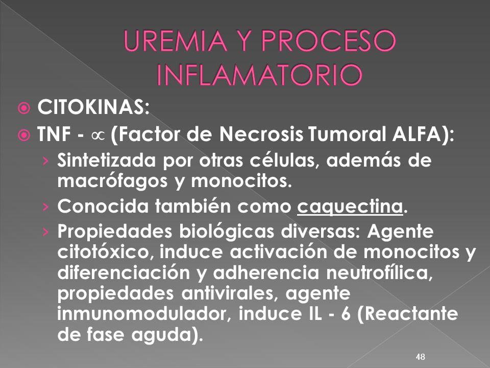 48 CITOKINAS: TNF - (Factor de Necrosis Tumoral ALFA): Sintetizada por otras células, además de macrófagos y monocitos. Conocida también como caquecti