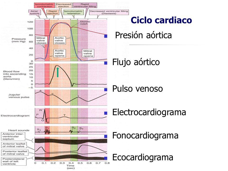 Ciclo cardiaco Presión aórtica Flujo aórtico Pulso venoso Electrocardiograma Fonocardiograma Ecocardiograma Ciclo cardiaco