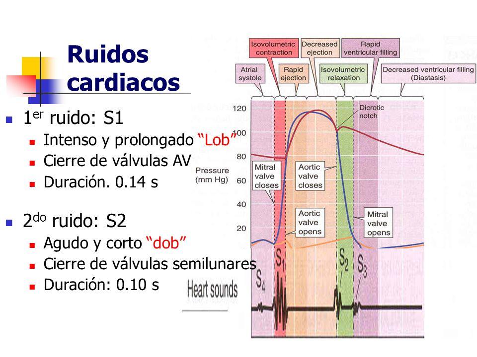 Ruidos cardiacos 1 er ruido: S1 Intenso y prolongado Lob Cierre de válvulas AV Duración. 0.14 s 2 do ruido: S2 Agudo y corto dob Cierre de válvulas se