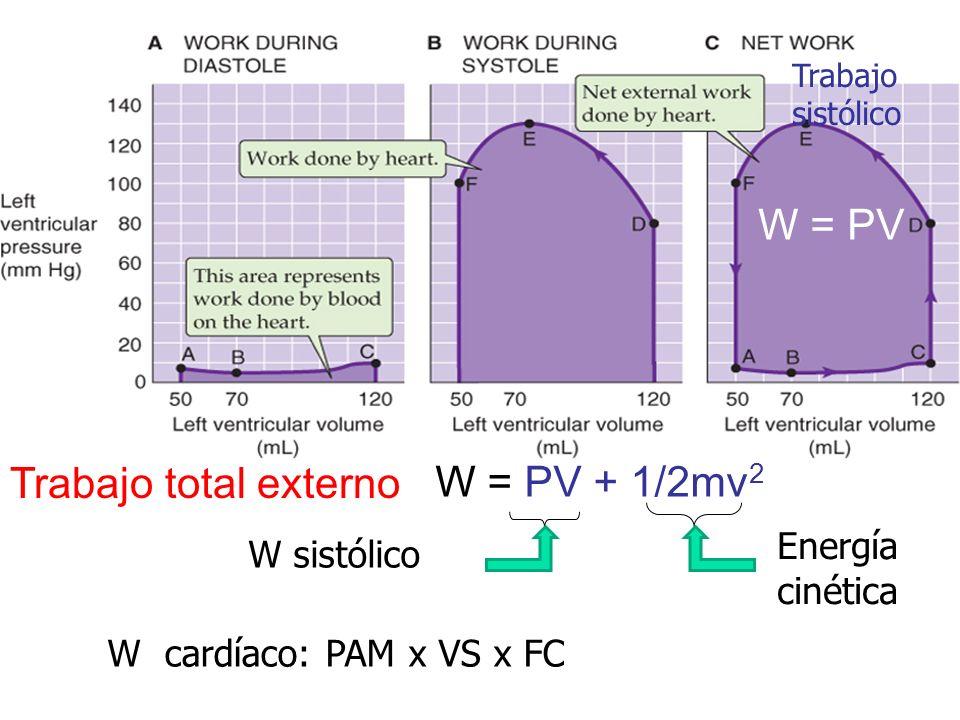 W=PV W = PV + 1/2mv 2 Trabajo total externo Energía cinética W sistólico W = PV Trabajo sistólico W cardíaco: PAM x VS x FC
