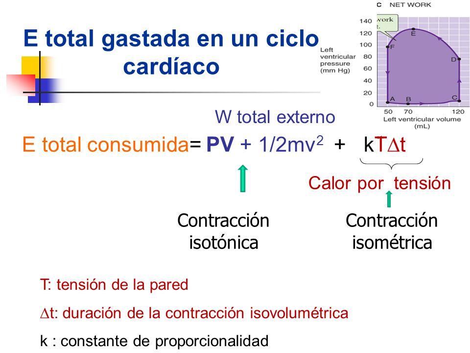 E total gastada en un ciclo cardíaco E total consumida= PV + 1/2mv 2 + kT t Calor por tensión W total externo Contracción isométrica Contracción isotó