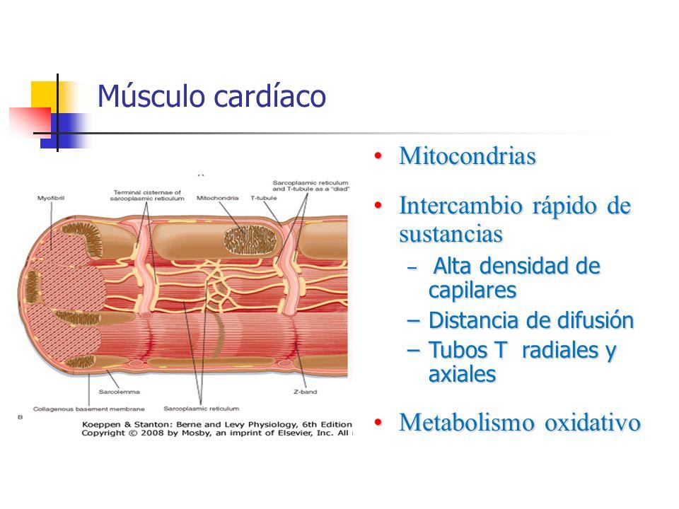 Músculo cardíaco MitocondriasMitocondrias Intercambio rápido de sustanciasIntercambio rápido de sustancias – Alta densidad de capilares –Distancia de