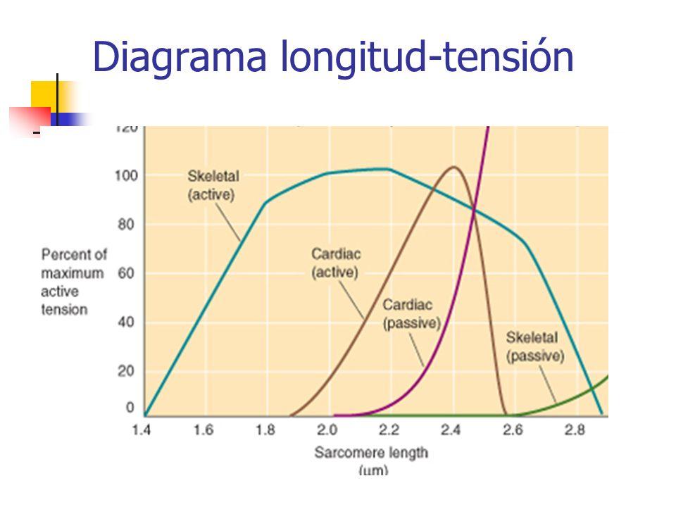Diagrama longitud-tensión