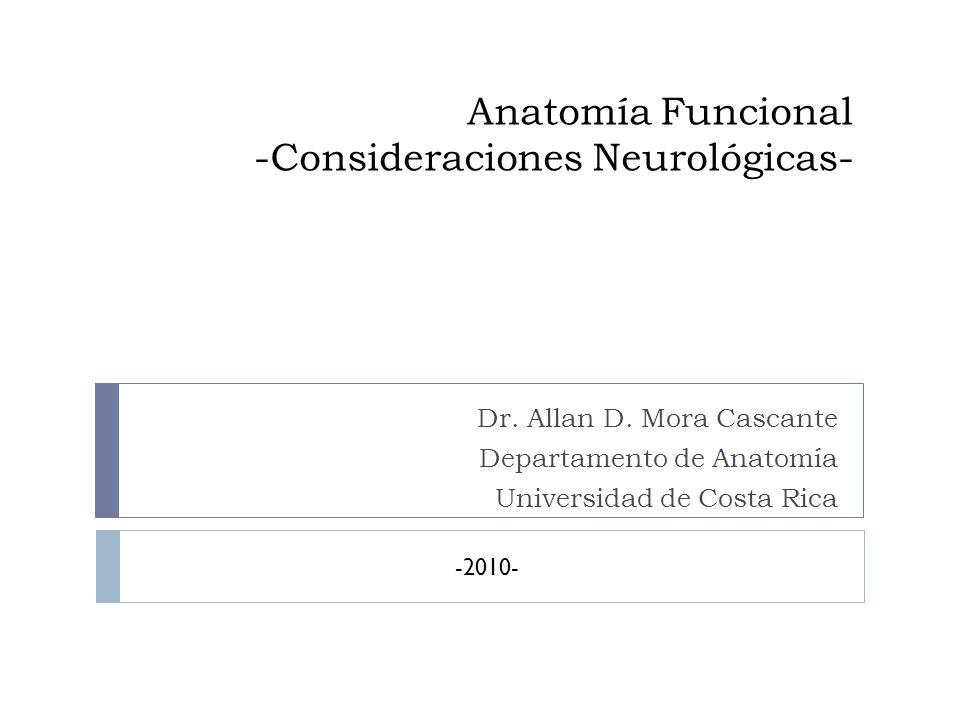 Anatomía Funcional -Consideraciones Neurológicas- Dr. Allan D. Mora Cascante Departamento de Anatomía Universidad de Costa Rica -2010-