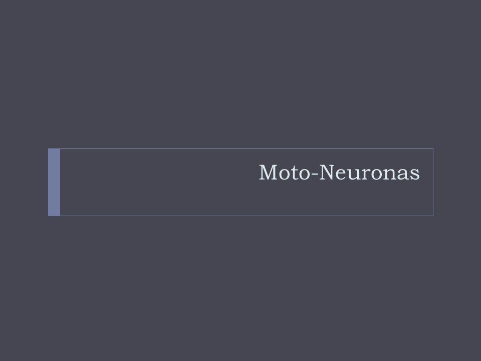 Moto-Neuronas