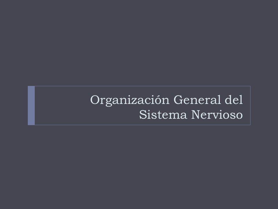 Organización General del Sistema Nervioso