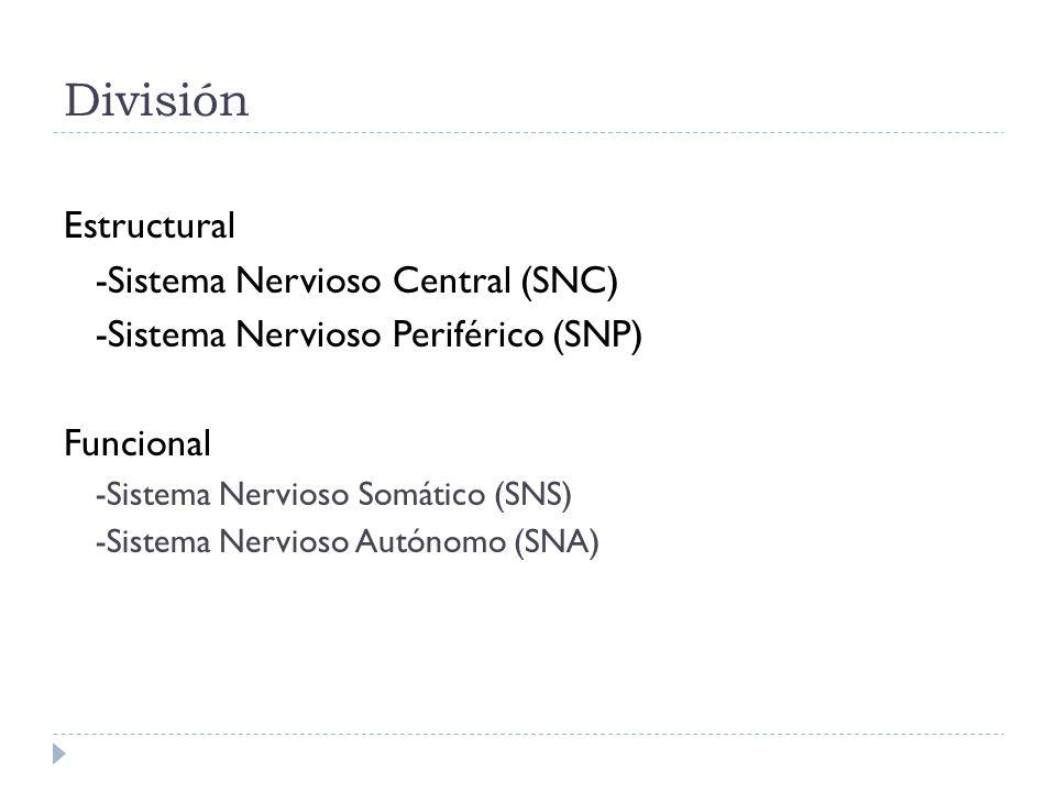 División Estructural -Sistema Nervioso Central (SNC) -Sistema Nervioso Periférico (SNP) Funcional -Sistema Nervioso Somático (SNS) -Sistema Nervioso A