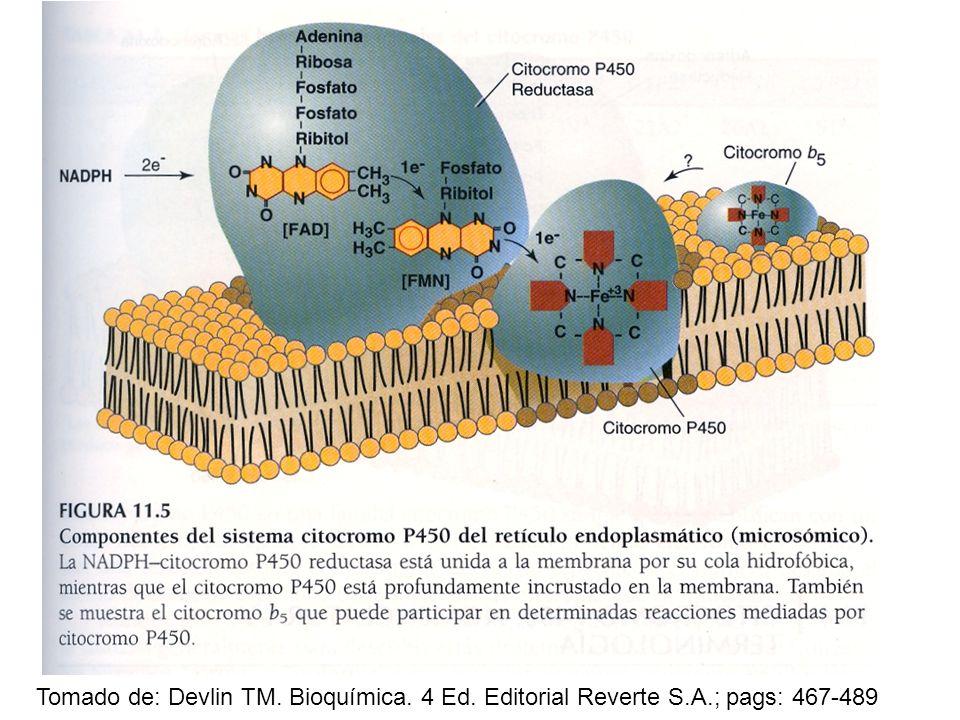 Tomado de: Devlin TM. Bioquímica. 4 Ed. Editorial Reverte S.A.; pags: 467-489