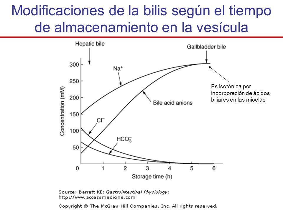 Modificaciones de la bilis según el tiempo de almacenamiento en la vesícula Es isotónica por incorporación de ácidos biliares en las micelas