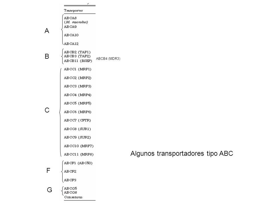 Algunos transportadores tipo ABC A B C F G ABCB4 (MDR3)