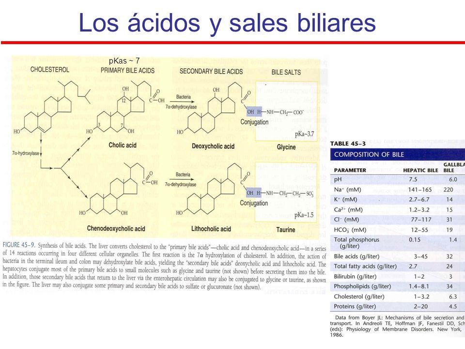 Los ácidos y sales biliares pKas ~ 7