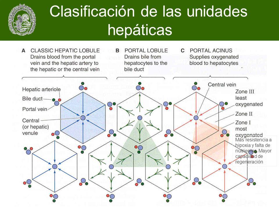 Más resistencia a hipoxia y falta de nutrientes. Mayor capacidad de regeneración Clasificación de las unidades hepáticas