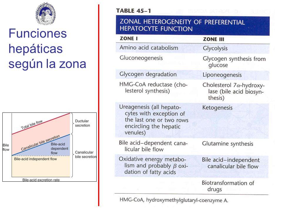Funciones hepáticas según la zona