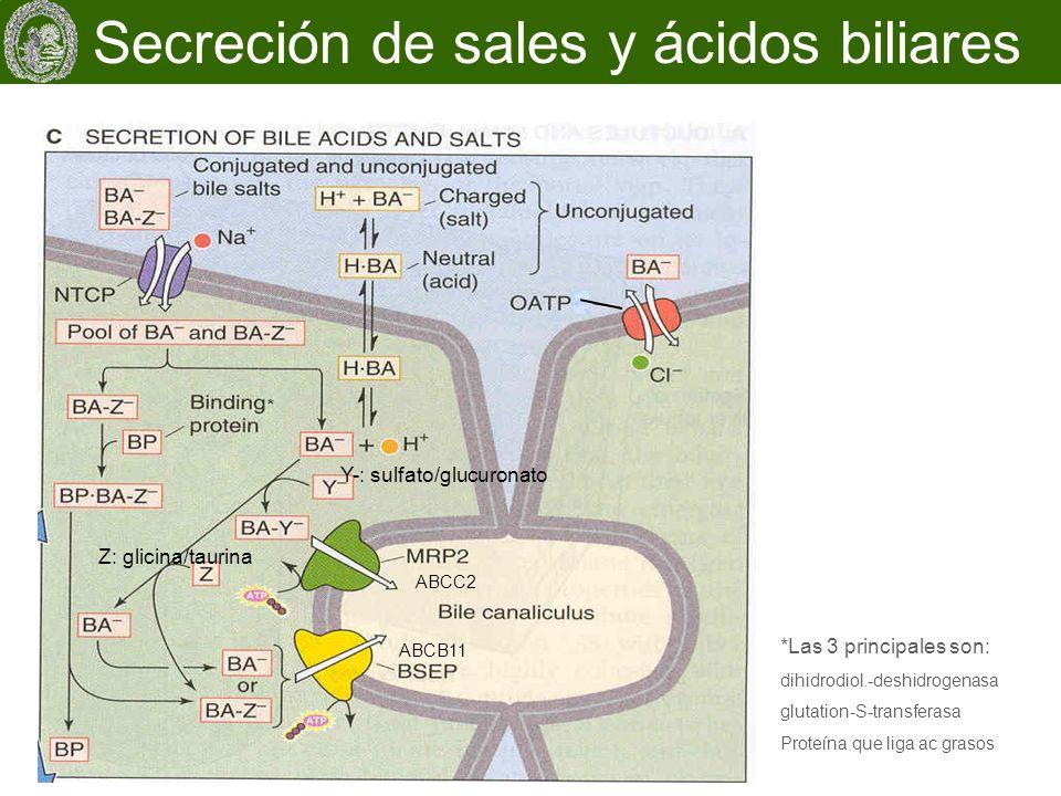 Estructura molecular de los transportadores ABC