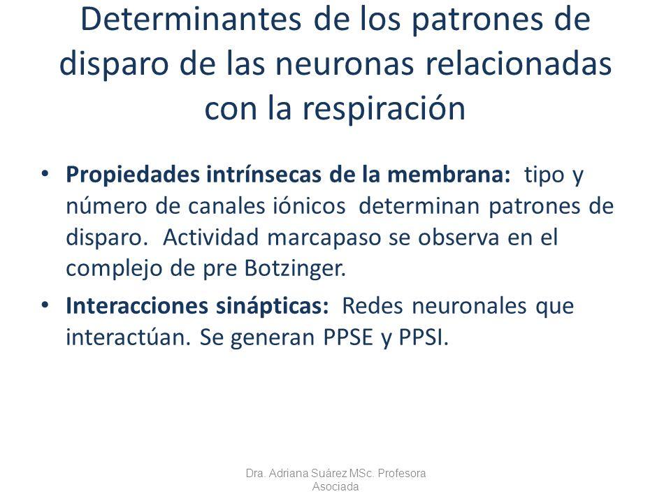 Determinantes de los patrones de disparo de las neuronas relacionadas con la respiración Propiedades intrínsecas de la membrana: tipo y número de cana