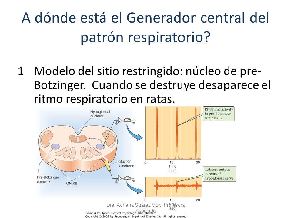 A dónde está el Generador central del patrón respiratorio? 1Modelo del sitio restringido: núcleo de pre- Botzinger. Cuando se destruye desaparece el r