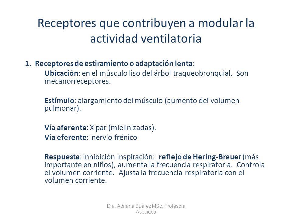 Receptores que contribuyen a modular la actividad ventilatoria 1. Receptores de estiramiento o adaptación lenta: Ubicación: en el músculo liso del árb