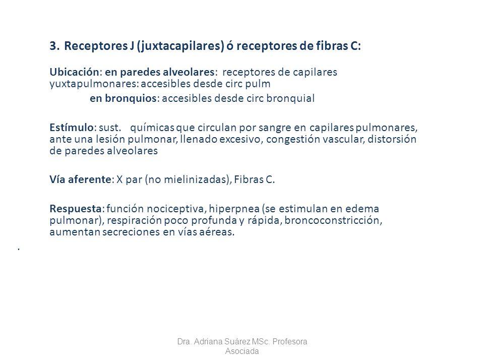 3. Receptores J (juxtacapilares) ó receptores de fibras C: Ubicación: en paredes alveolares: receptores de capilares yuxtapulmonares: accesibles desde