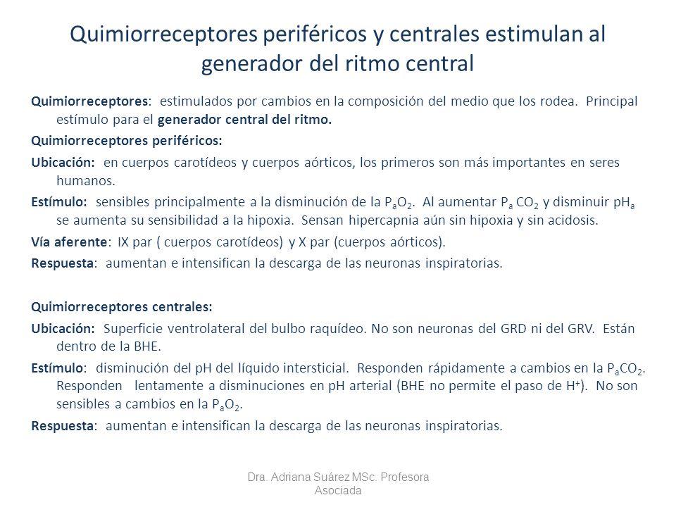 Quimiorreceptores periféricos y centrales estimulan al generador del ritmo central Quimiorreceptores: estimulados por cambios en la composición del me