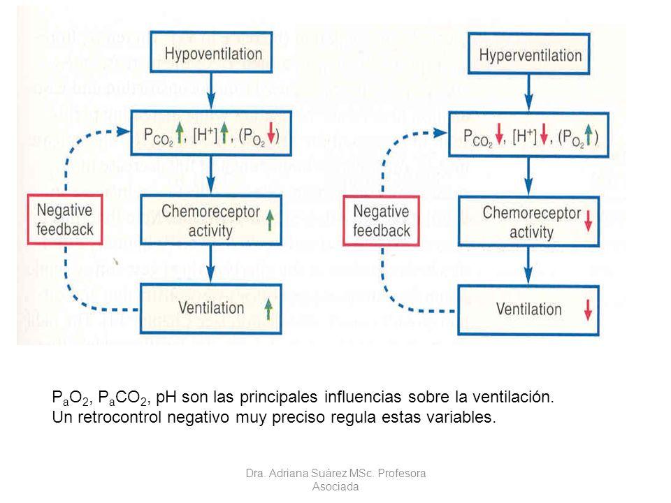 P a O 2, P a CO 2, pH son las principales influencias sobre la ventilación. Un retrocontrol negativo muy preciso regula estas variables. Dra. Adriana