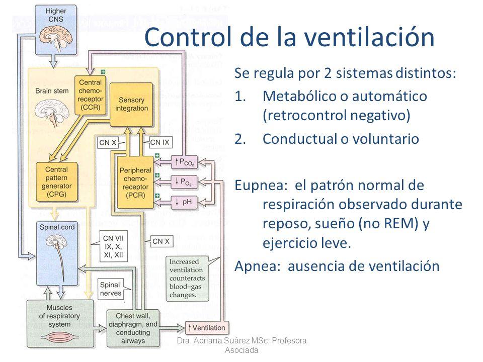 Control de la ventilación Se regula por 2 sistemas distintos: 1.Metabólico o automático (retrocontrol negativo) 2.Conductual o voluntario Eupnea: el p