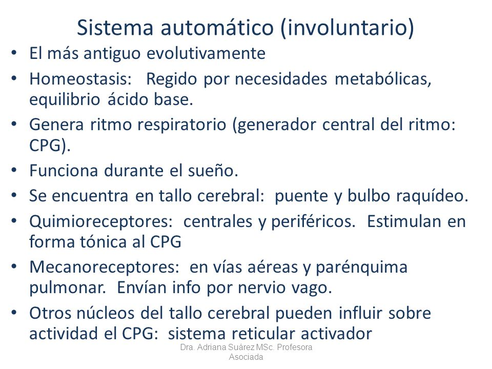 Sistema automático (involuntario) El más antiguo evolutivamente Homeostasis: Regido por necesidades metabólicas, equilibrio ácido base. Genera ritmo r