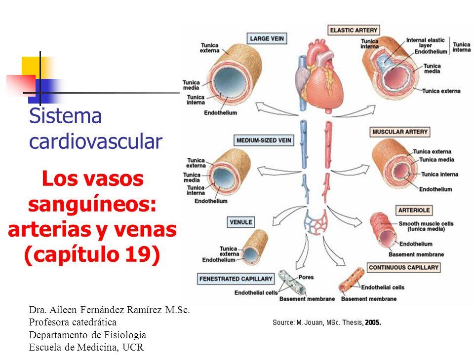 Sistema cardiovascular Dra. Aileen Fernández Ramírez M.Sc. Profesora catedrática Departamento de Fisiología Escuela de Medicina, UCR Los vasos sanguín