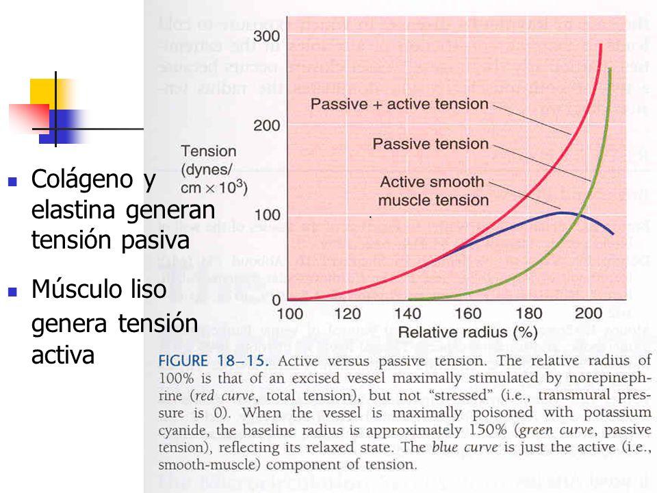 . Colágeno y elastina generan tensión pasiva Músculo liso genera tensión activa