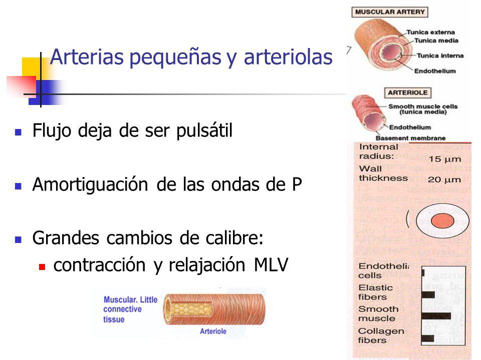 Arterias pequeñas y arteriolas Flujo deja de ser pulsátil Amortiguación de las ondas de P Grandes cambios de calibre: contracción y relajación MLV