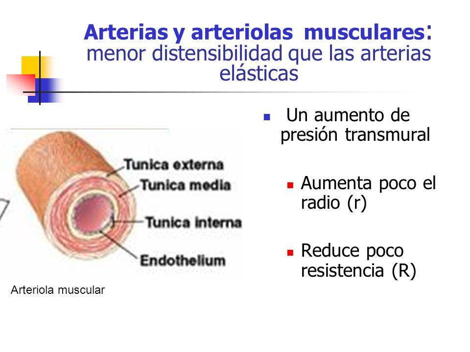 Arterias y arteriolas musculares : menor distensibilidad que las arterias elásticas Un aumento de presión transmural Aumenta poco el radio (r) Reduce