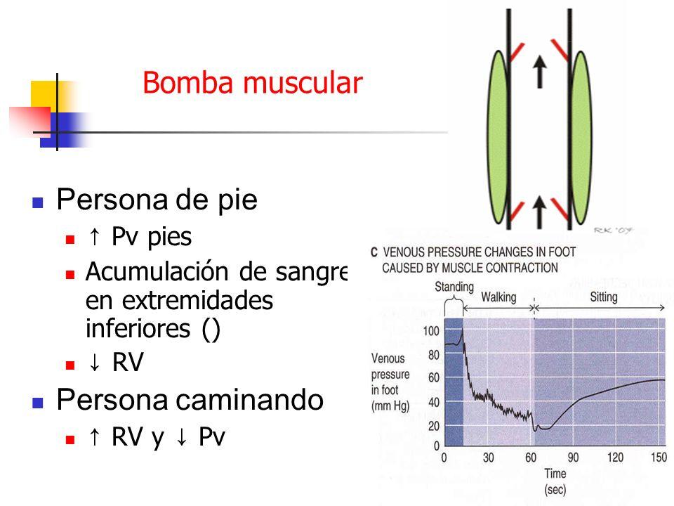 Bomba muscular Persona de pie Pv pies Acumulación de sangre en extremidades inferiores () RV Persona caminando RV y Pv