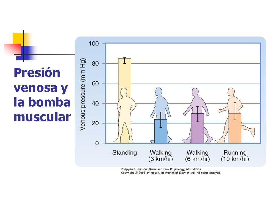 Presión venosa y la bomba muscular