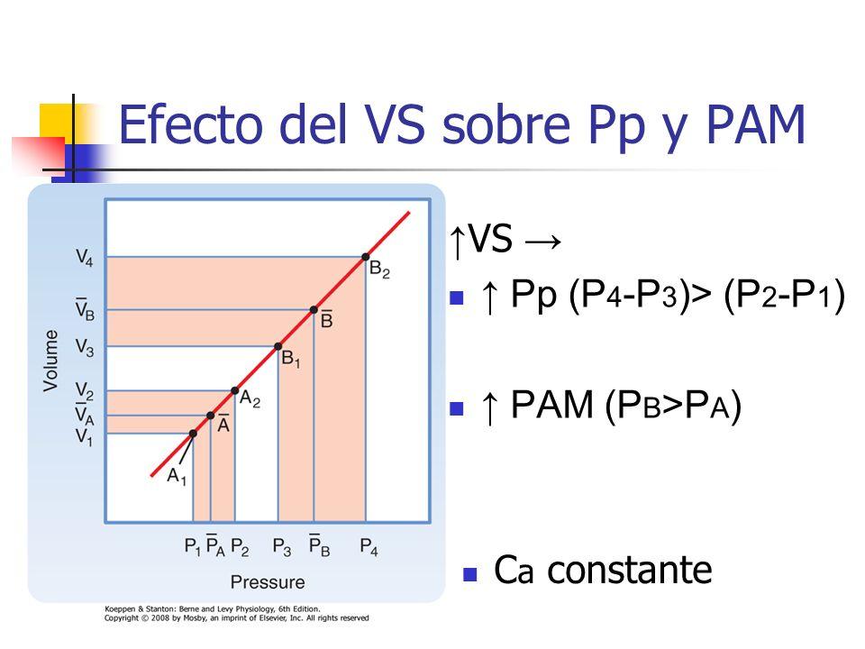 Efecto del VS sobre Pp y PAM VS Pp (P 4 -P 3 )> (P 2 -P 1 ) PAM (P B >P A ) C a constante