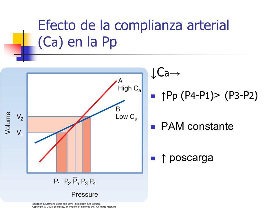 Efecto de la complianza arterial (C a ) en la Pp C a P p (P 4 -P 1 ) > (P 3 -P 2 ) PAM constante poscarga