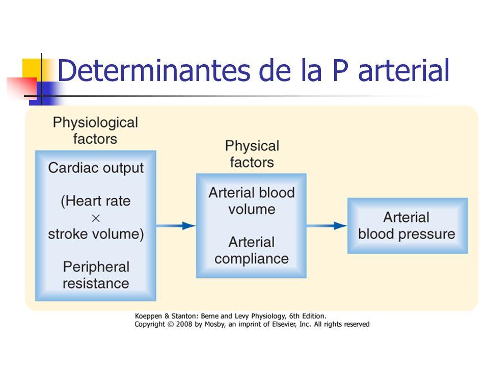 Determinantes de la P arterial