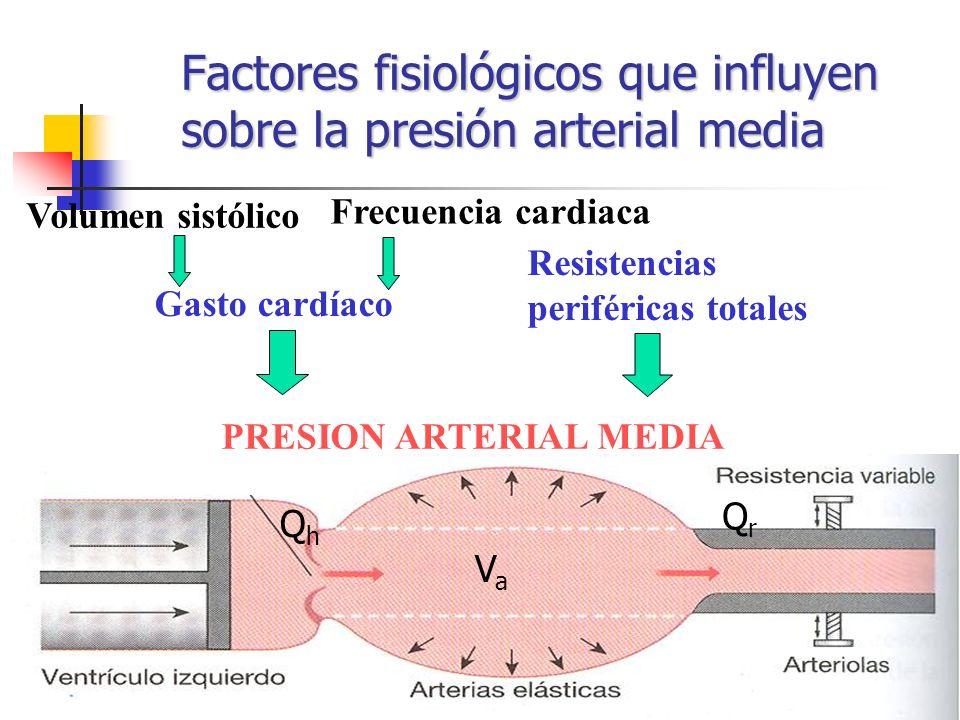 Factores fisiológicos que influyen sobre la presión arterial media Frecuencia cardiaca Gasto cardíaco Resistencias periféricas totales Volumen sistóli