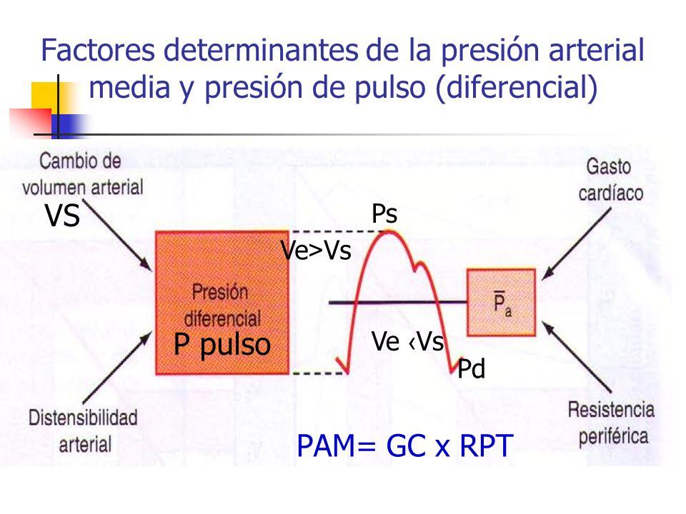 Factores determinantes de la presión arterial media y presión de pulso (diferencial) PAM= GC x RPT P pulso VS Ve > Vs Ps Ve Vs Pd