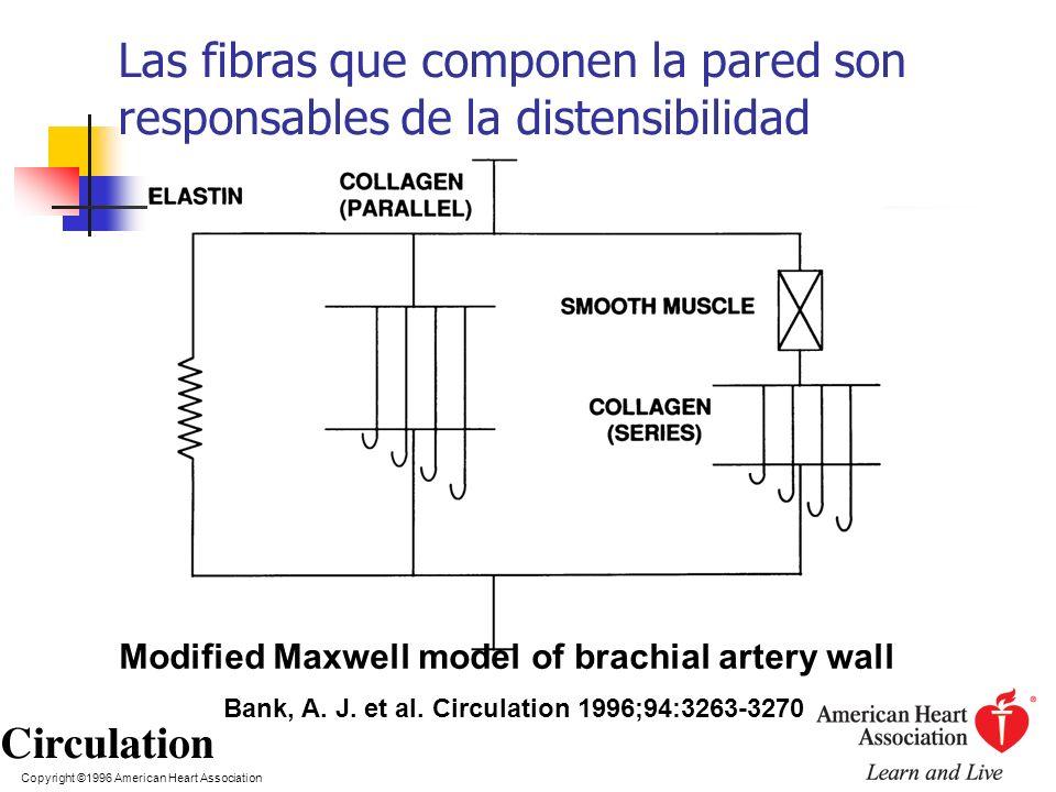 Copyright ©1996 American Heart Association Bank, A. J. et al. Circulation 1996;94:3263-3270 Modified Maxwell model of brachial artery wall Las fibras