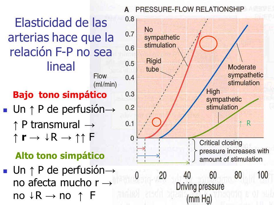 Elasticidad de las arterias hace que la relación F-P no sea lineal Bajo tono simpático Un P de perfusión P transmural r R F Alto tono simpático Un P d
