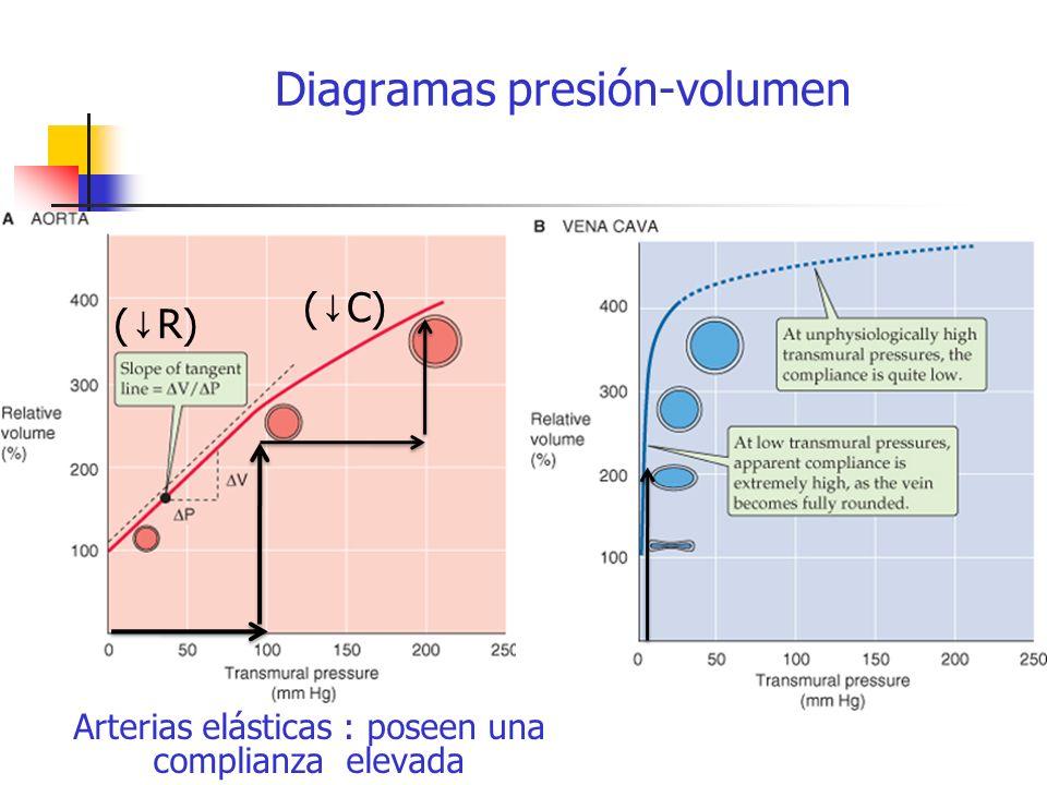 Diagramas presión-volumen ( R) ( C) Arterias elásticas : poseen una complianza elevada
