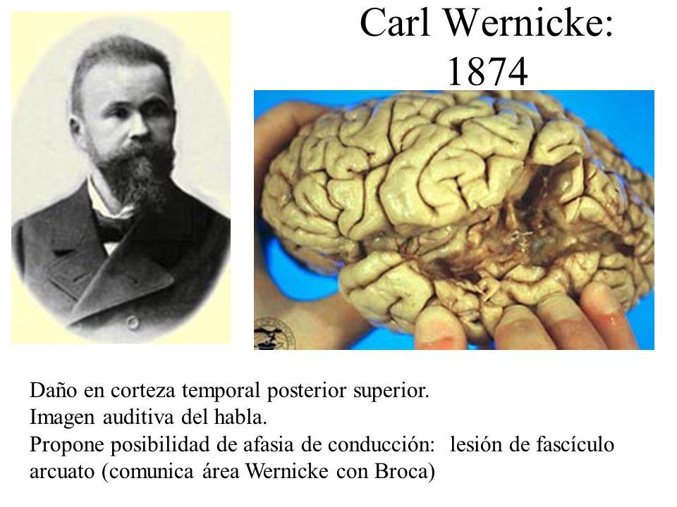 Carl Wernicke: 1874 Daño en corteza temporal posterior superior. Imagen auditiva del habla. Propone posibilidad de afasia de conducción: lesión de fas
